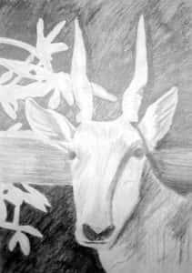 Carmem Maria S. Zulato Fig 3 211x300 - Desenhos dos Alunos da Oficina de Desenho Artístico 2002 a 2017