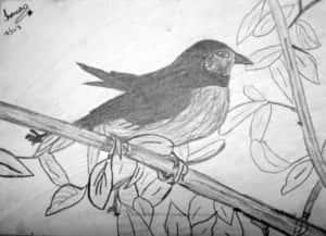 Ismara Costa Pereira Fig 1 300x217 - Desenhos dos Alunos da Oficina de Desenho Artístico 2002 a 2017