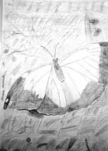 Maria Miranda Fig 1 215x300 - Desenhos dos Alunos da Oficina de Desenho Artístico 2002 a 2017