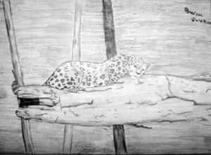 Rhaissa Faier Braga Fig 1 300x220 - Desenhos dos Alunos da Oficina de Desenho Artístico 2002 a 2017