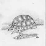 Shirley 150x150 - Desenhos dos Alunos da Oficina de Desenho Artístico 2002 a 2017